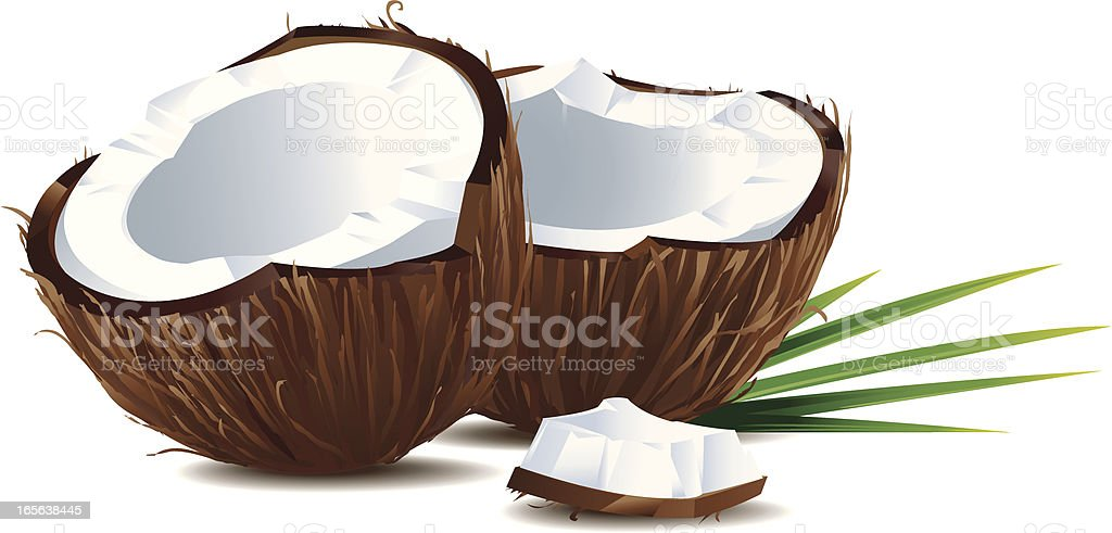 Coconuts vector art illustration
