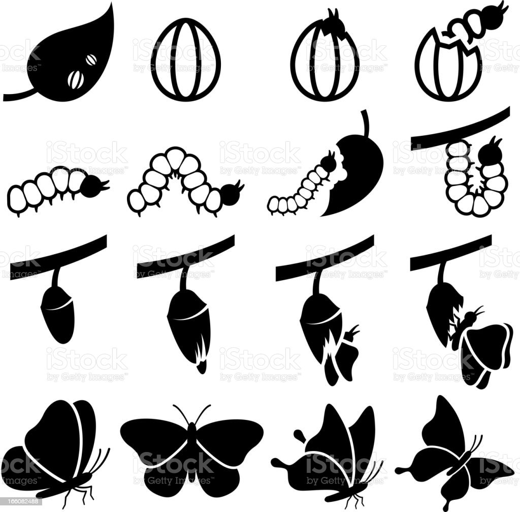 Cocoon to Butterfly Transformation black and white icon set vector art illustration