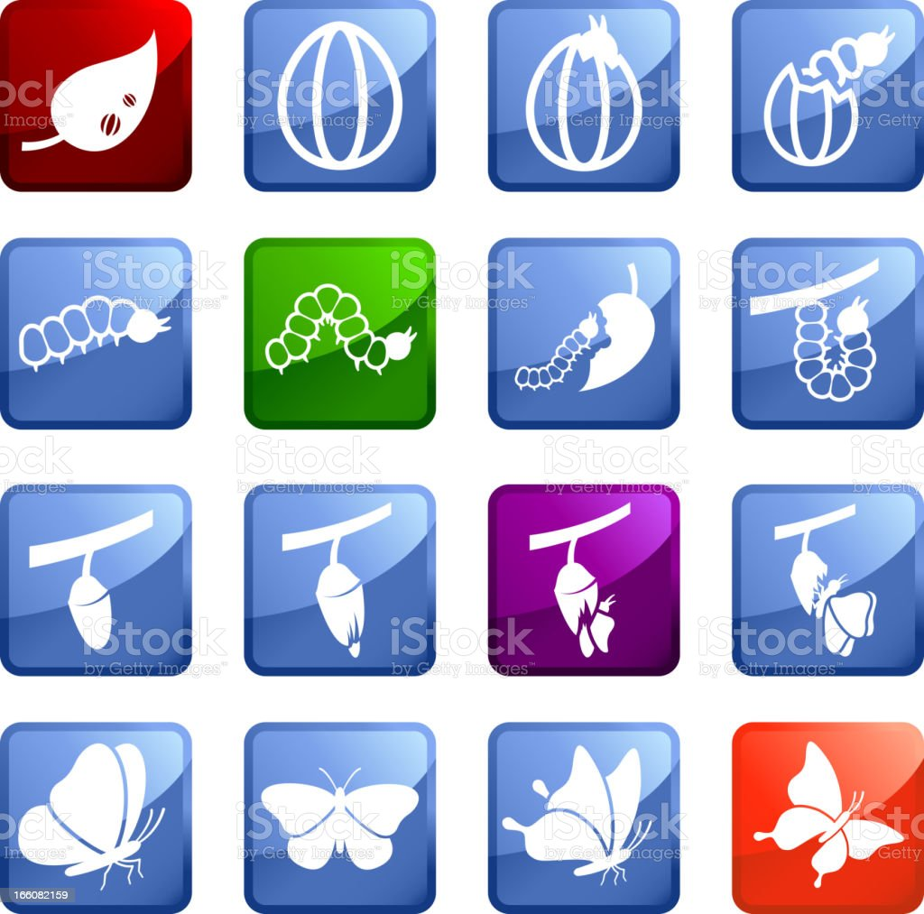Cocoon to Butterfly Transformation royalty free vector icon set stickers royalty-free stock vector art
