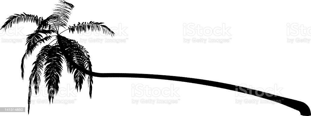 Cocos nucifera vector art illustration