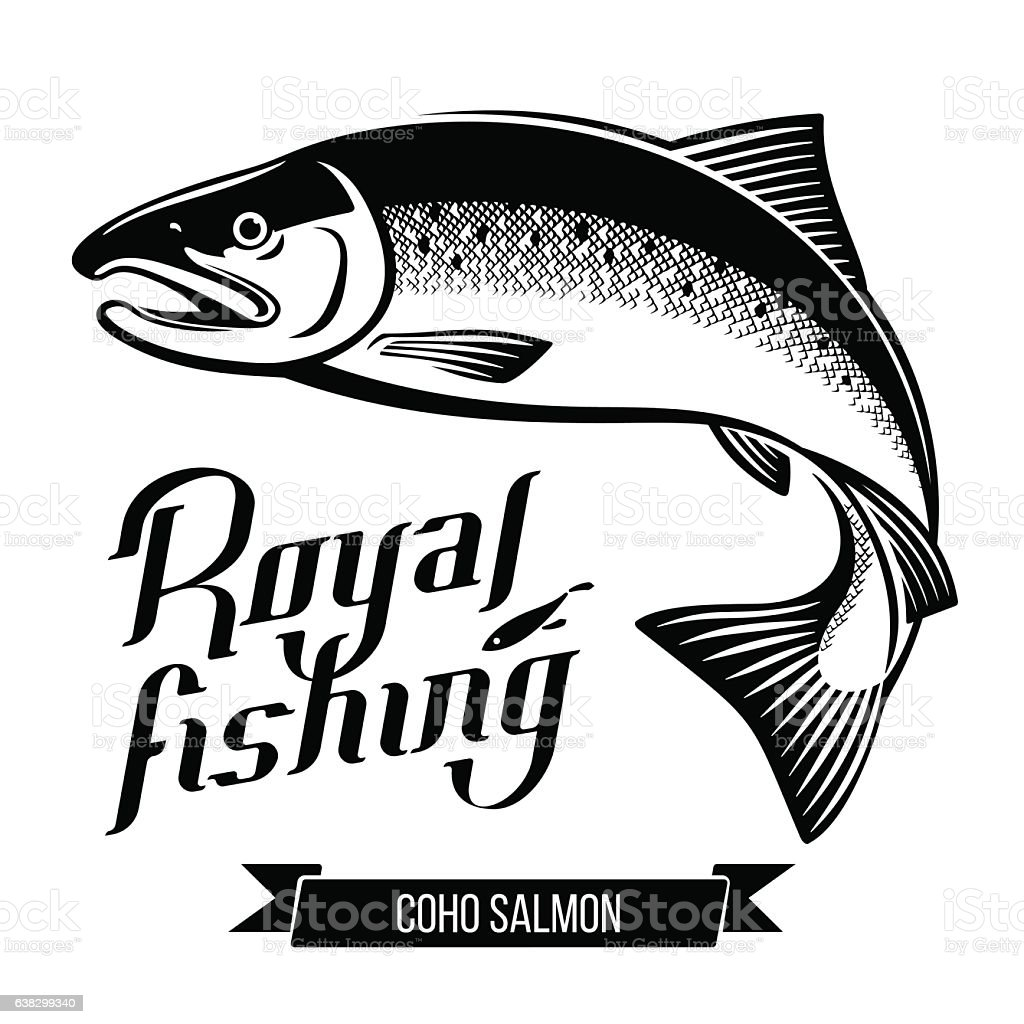 Coho Salmon fish vector illustration vector art illustration