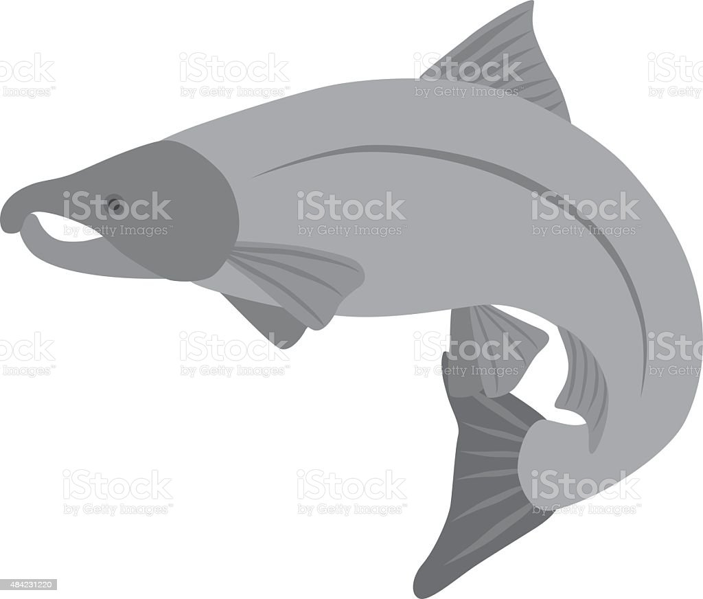 Coho Salmon Grayscale Vector Illustration vector art illustration
