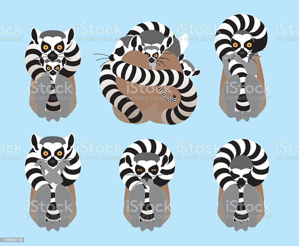 Cold want ring-tailed lemur vector art illustration