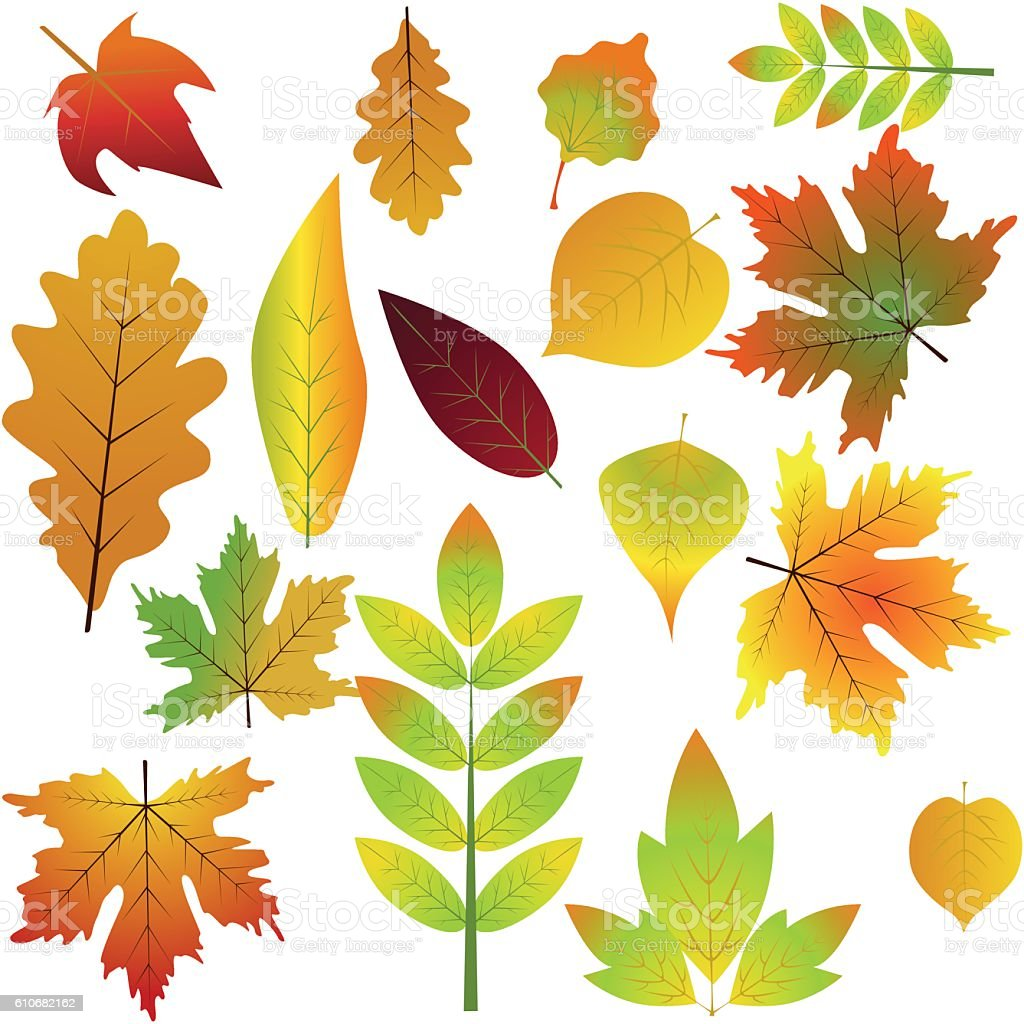 Collection beautiful colorful autumn leaves isolated on white background vector art illustration