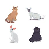 Collection Cats of Different Breeds. Vector isolated cat on white