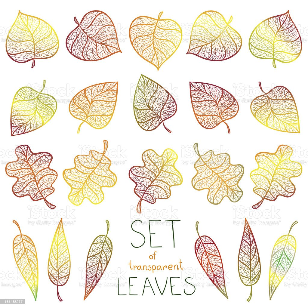 Collection colourful autumn leaves isolated royalty-free stock vector art