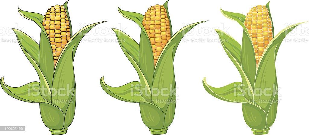 collection corn vector art illustration