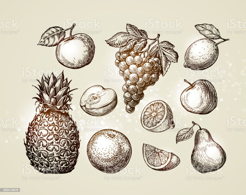 Collection fruits sketch. Hand-drawn elements such as apple, pineapple vector art illustration