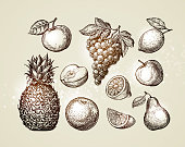 Collection fruits sketch. Hand-drawn elements such as apple, pineapple