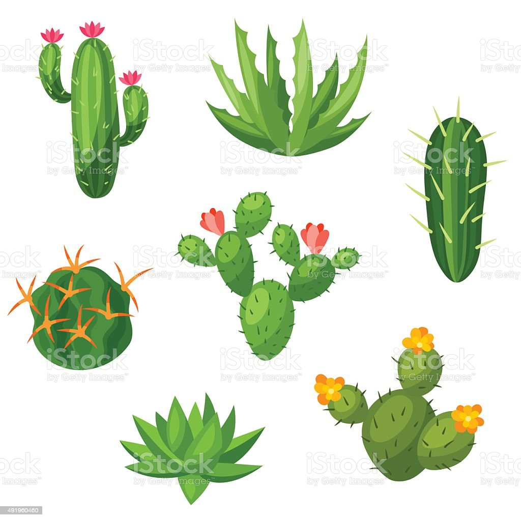 Collection of abstract cactuses and plants. Natural illustration vector art illustration