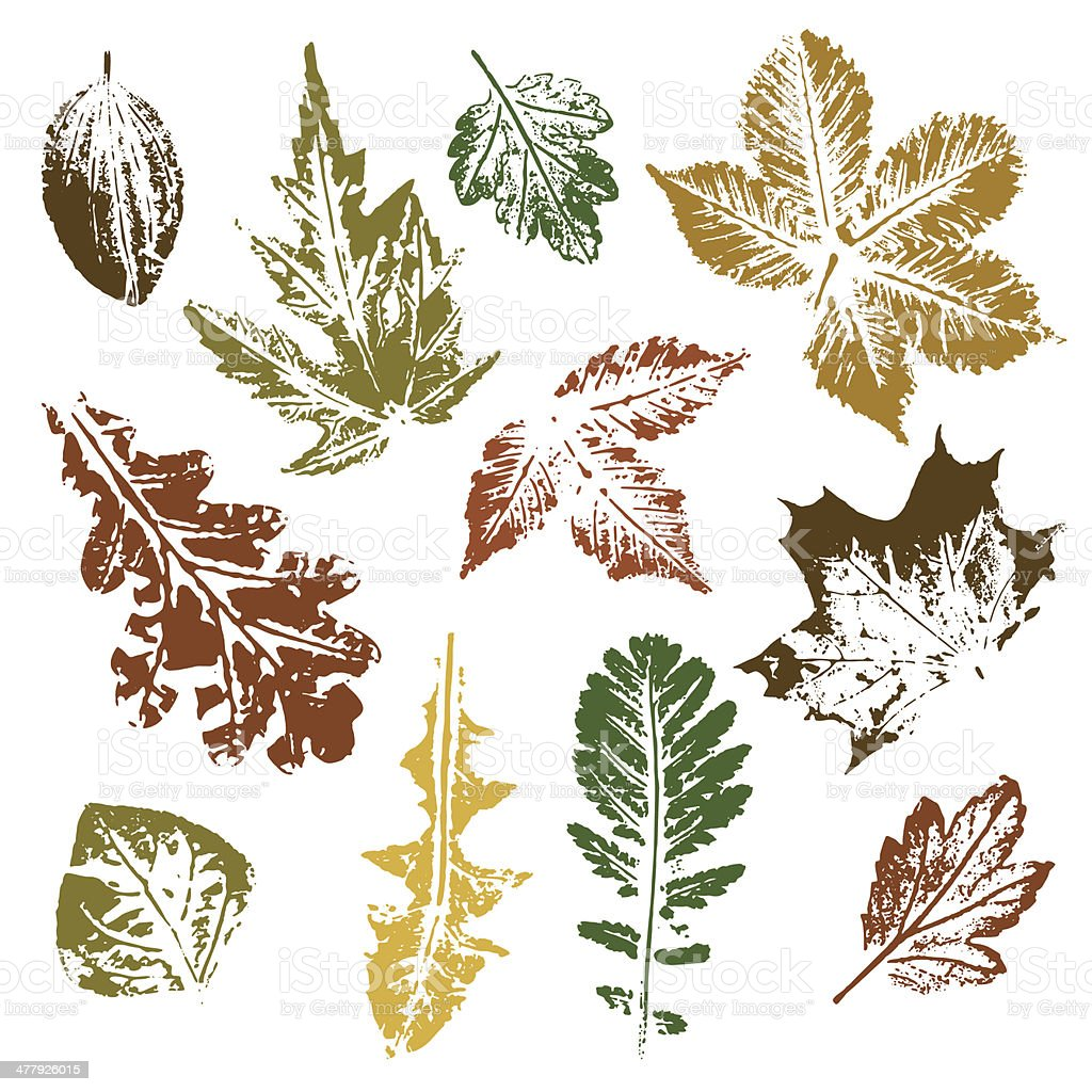 Collection of autumn leaves imprints royalty-free stock vector art