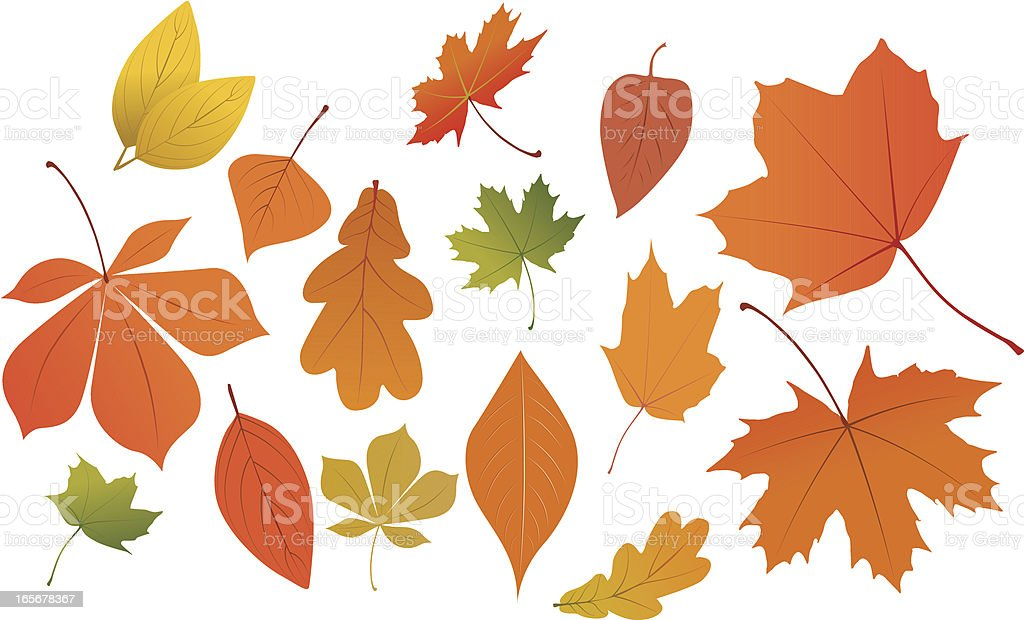 Collection of autumn leaves on white background vector art illustration