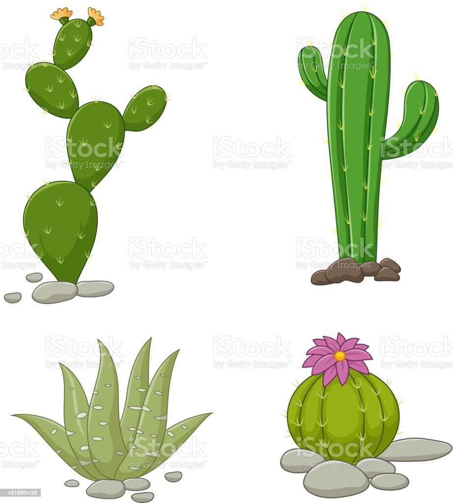 Collection of cactus illustration vector art illustration
