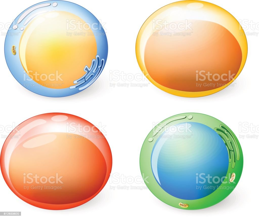 Collection of cells for your design. Set icons. vector art illustration