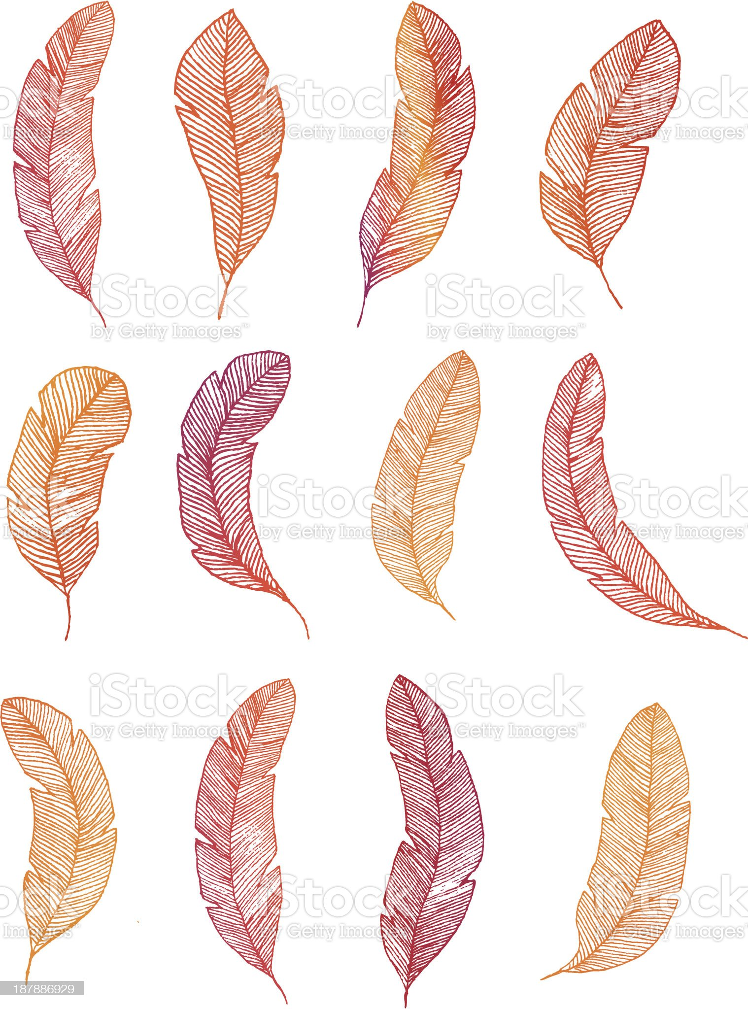 Collection of colorful feathers royalty-free stock vector art