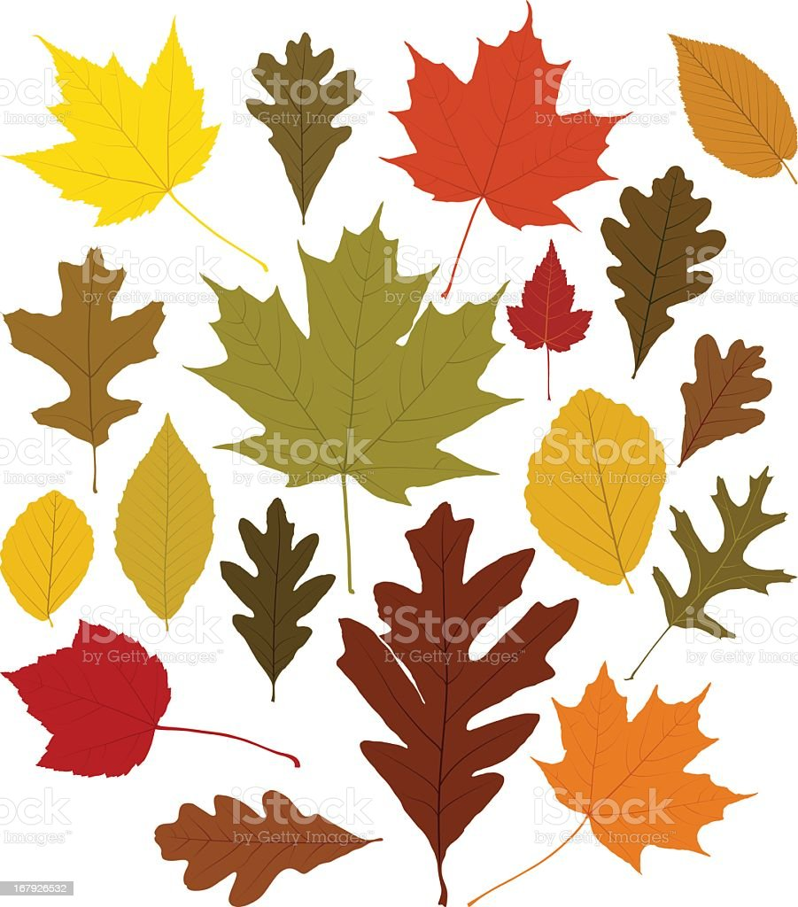 Collection of different color autumn leaves vector art illustration