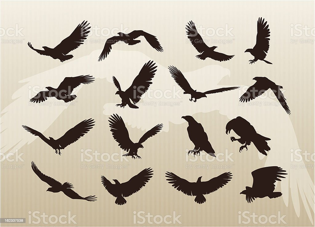collection of Eagles vector art illustration