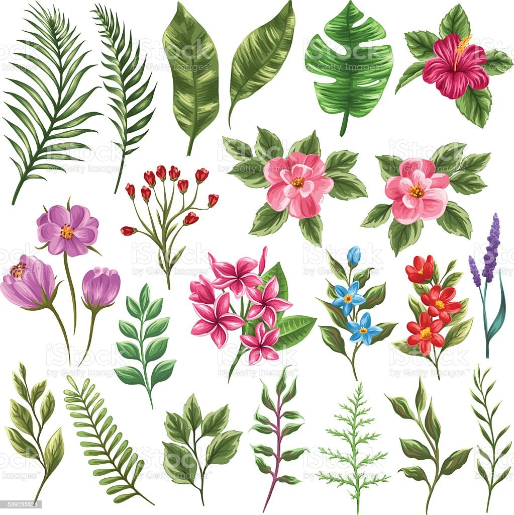 Collection of flowera and leaves vector art illustration