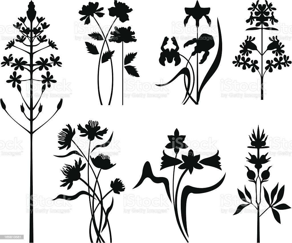 Collection of garden flowers royalty-free stock vector art