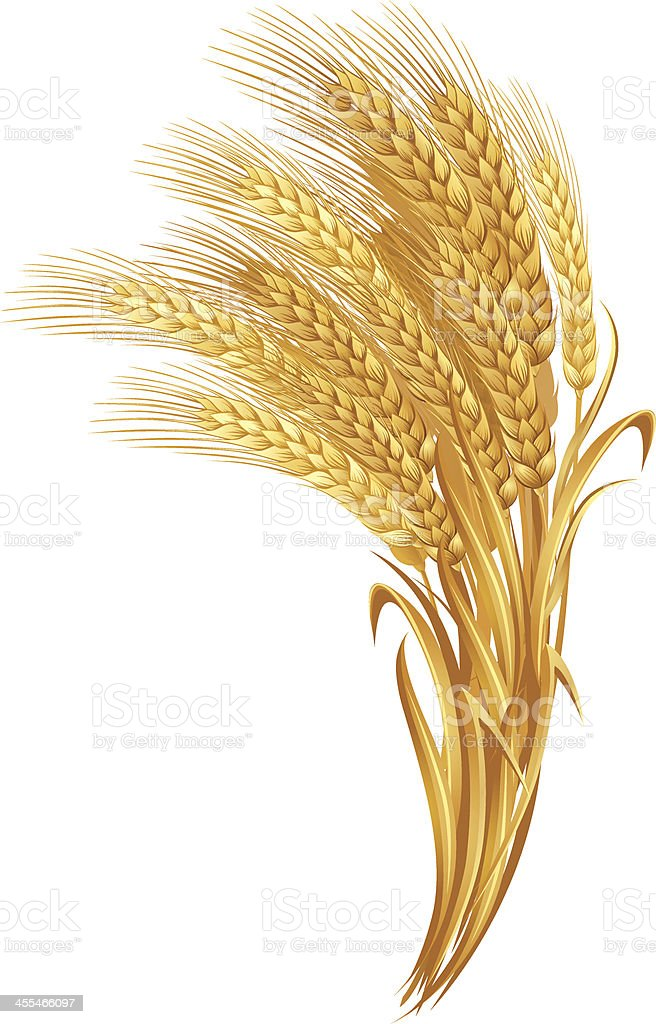 A collection of gold wheat against a white background vector art illustration