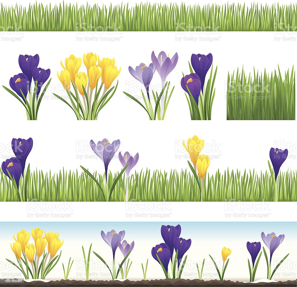 Collection of grass and crocus (seamless) vector art illustration