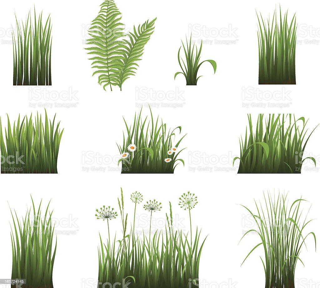 Collection of grass vector art illustration