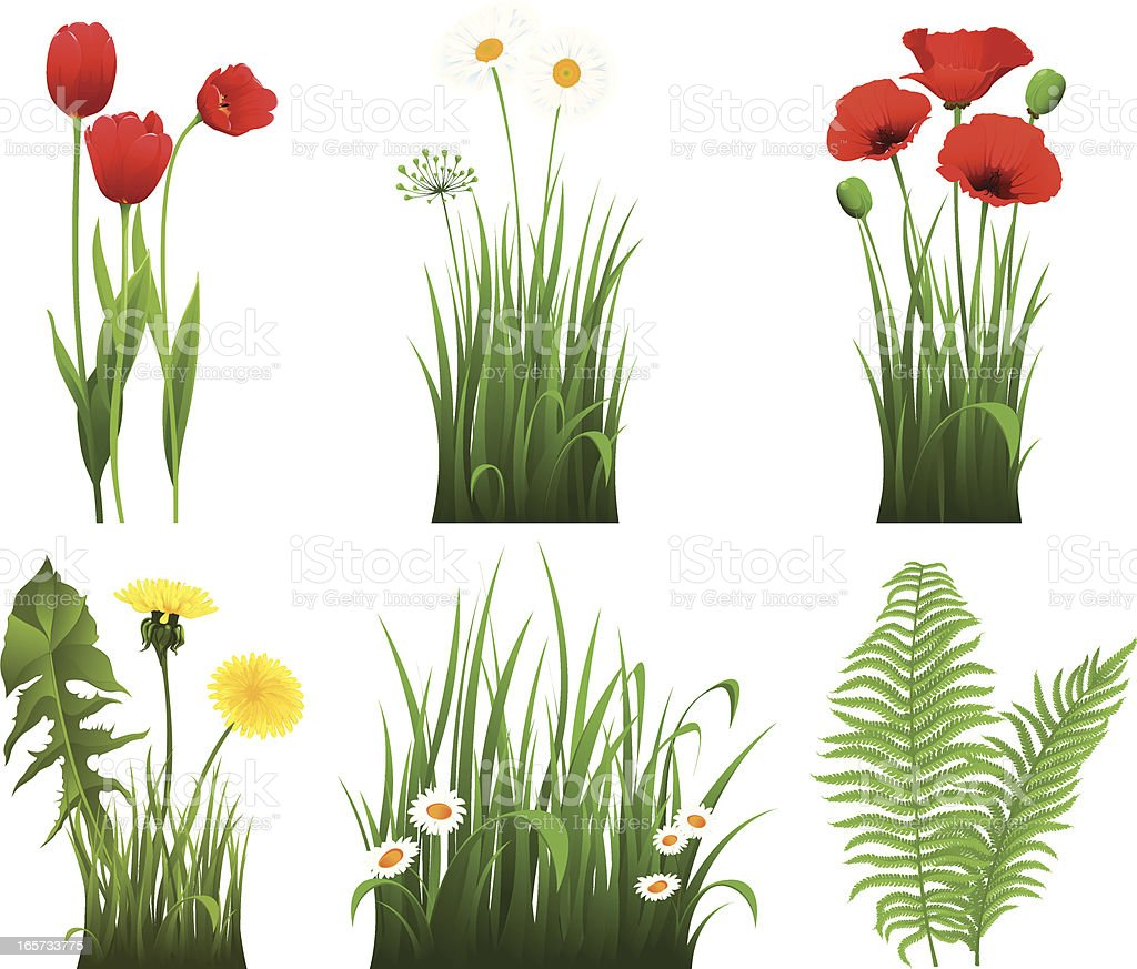 Collection of grass with flower royalty-free stock vector art