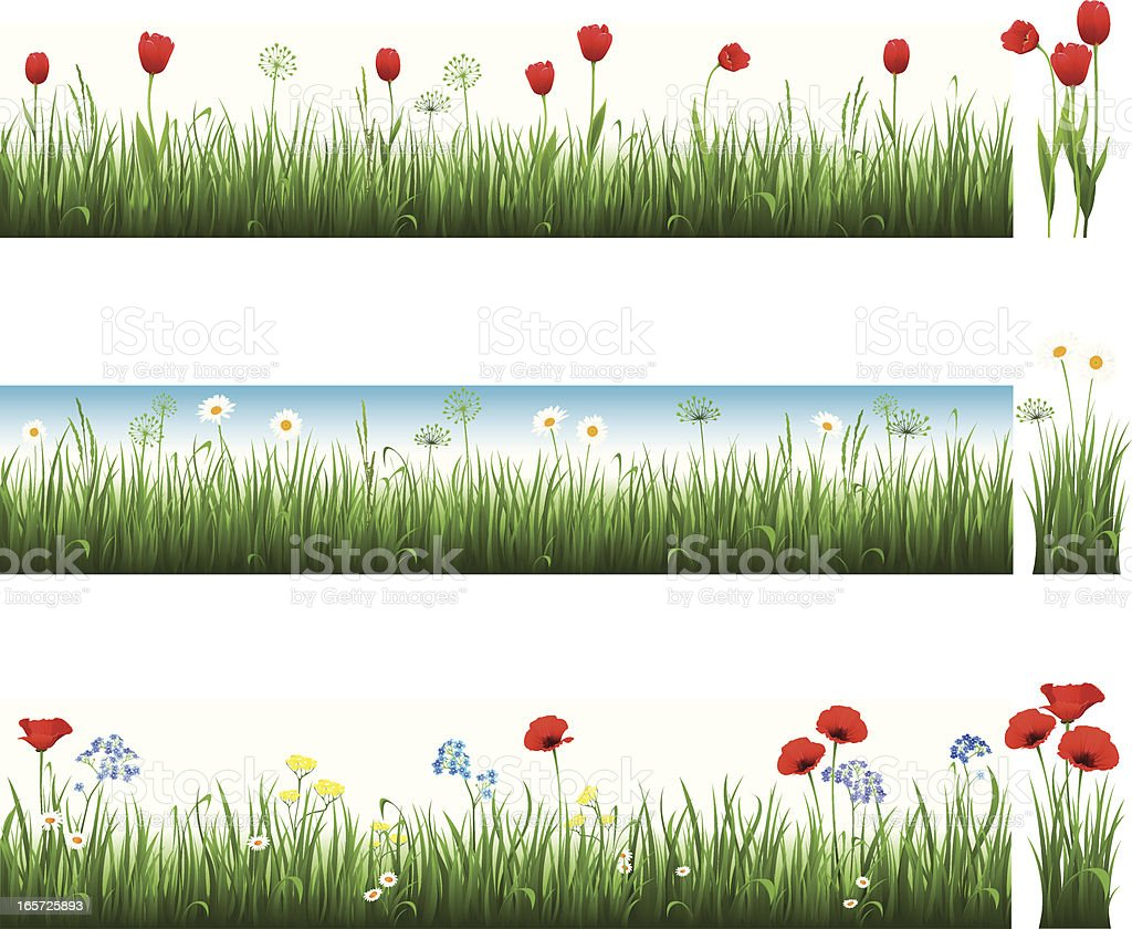Collection of grass with tulips, camomiles and poppies royalty-free stock vector art
