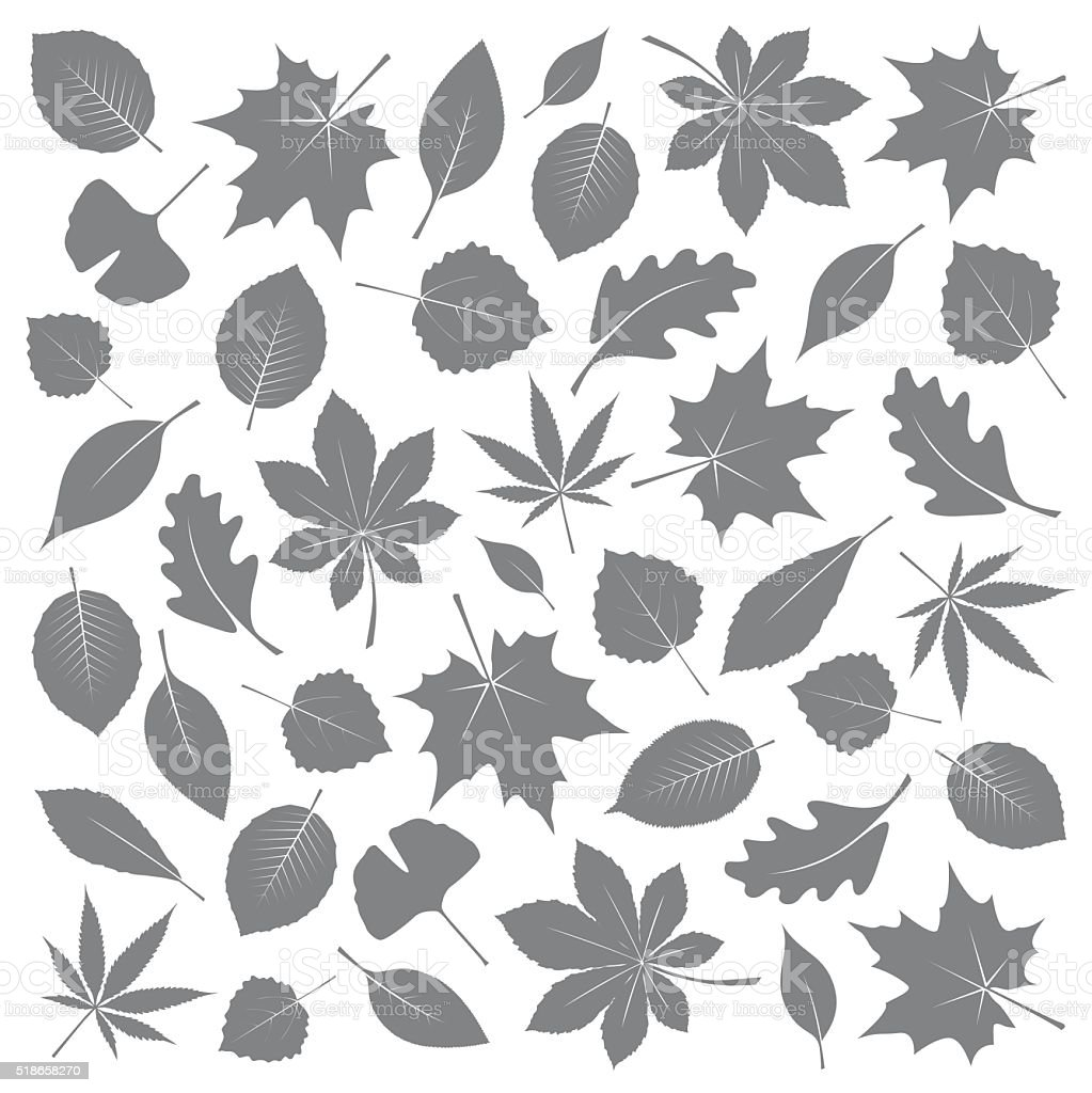 Collection of Grey Leafs. Vector Illustration. vector art illustration