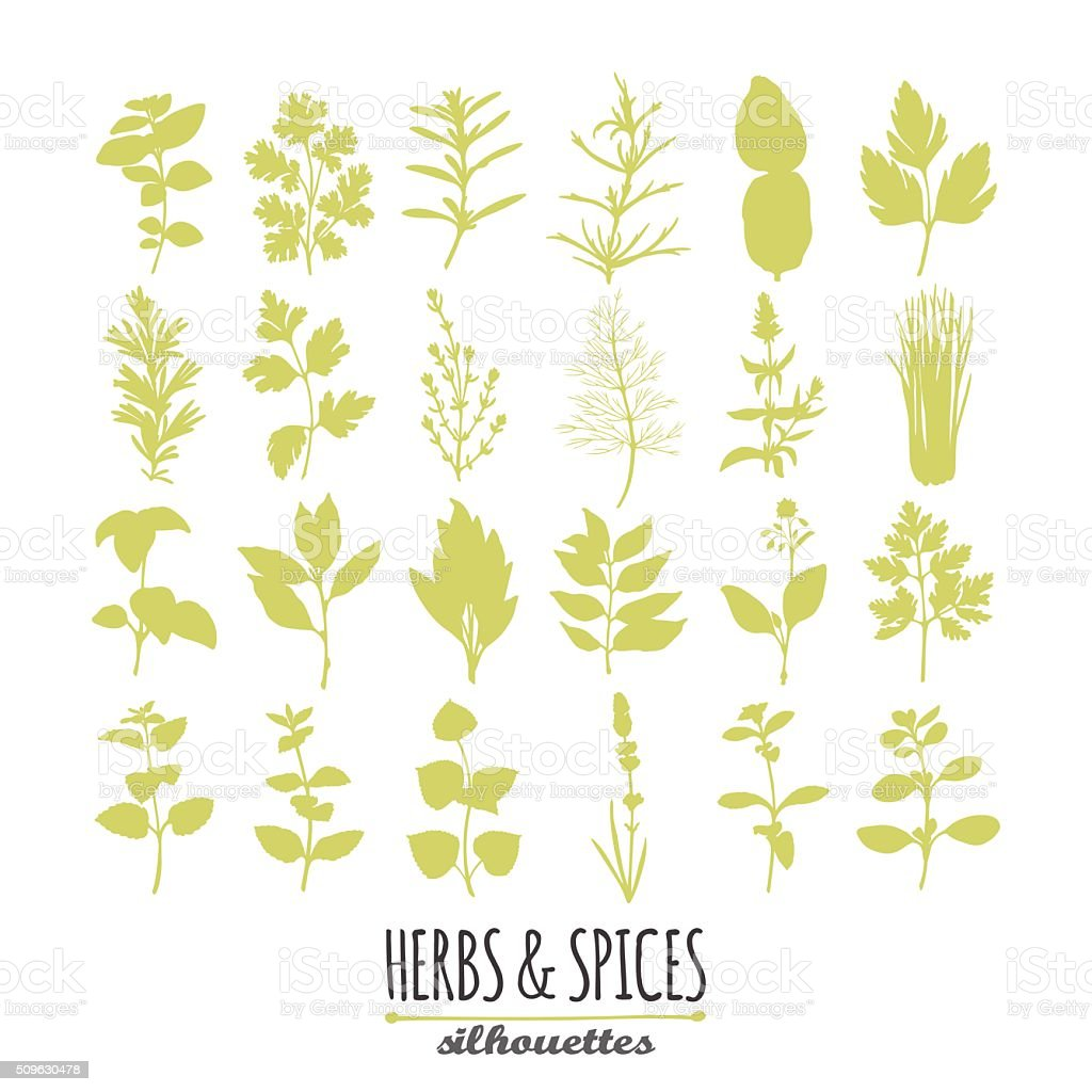 Collection of hand drawn spicy herbs silhouettes. Culinary elements for vector art illustration