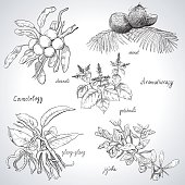 Collection of hand-drawn herbs and fruit