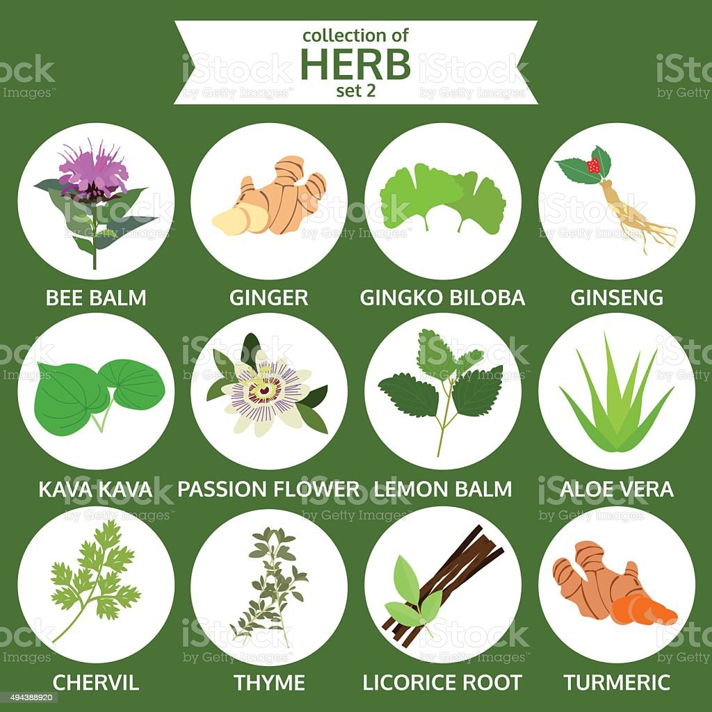 collection of herb, healthy food vector, flat icon set two vector art illustration