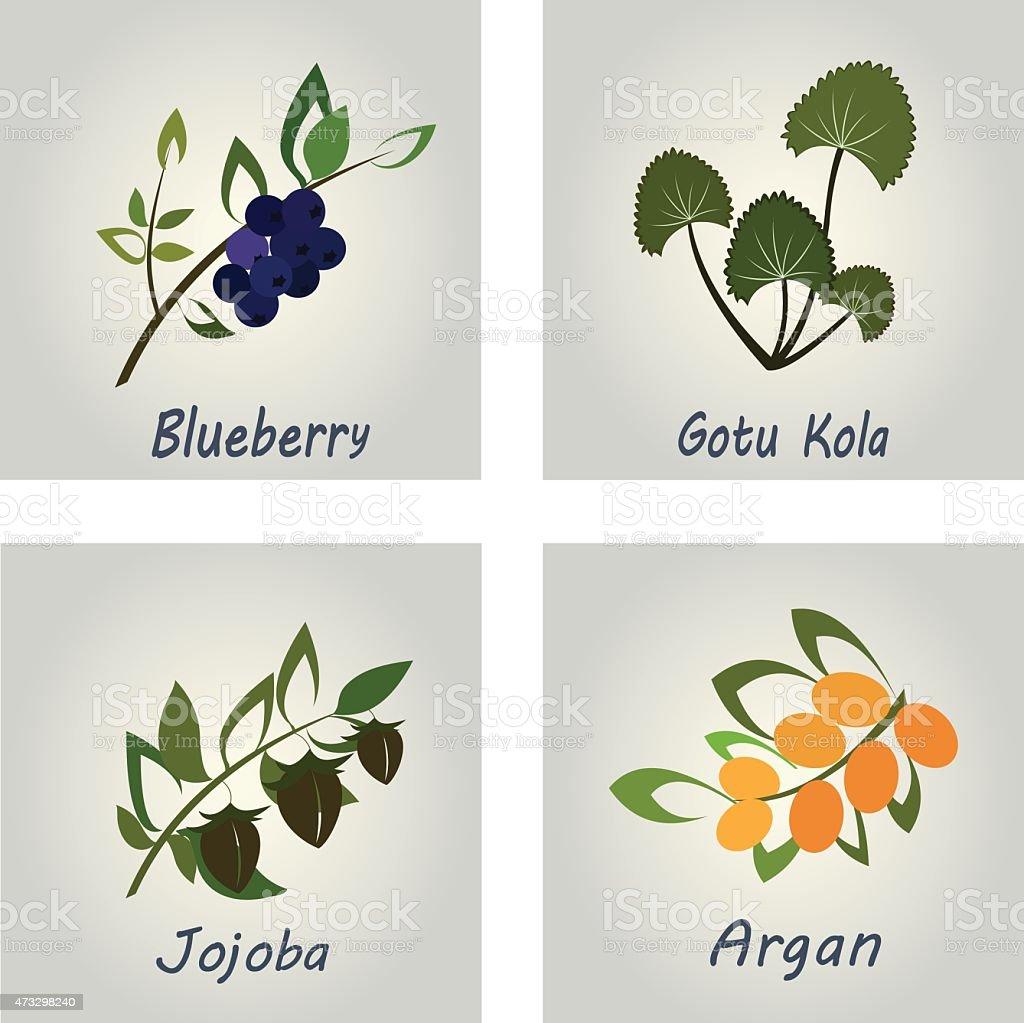 Collection of Herbs . Natural Supplements. Argan, Gotu Kola, Blueberry, Jojoba vector art illustration