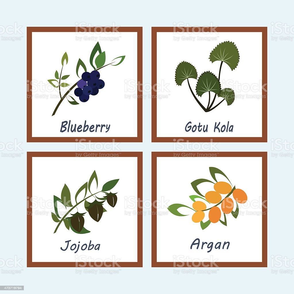 Collection of Herbs vector art illustration