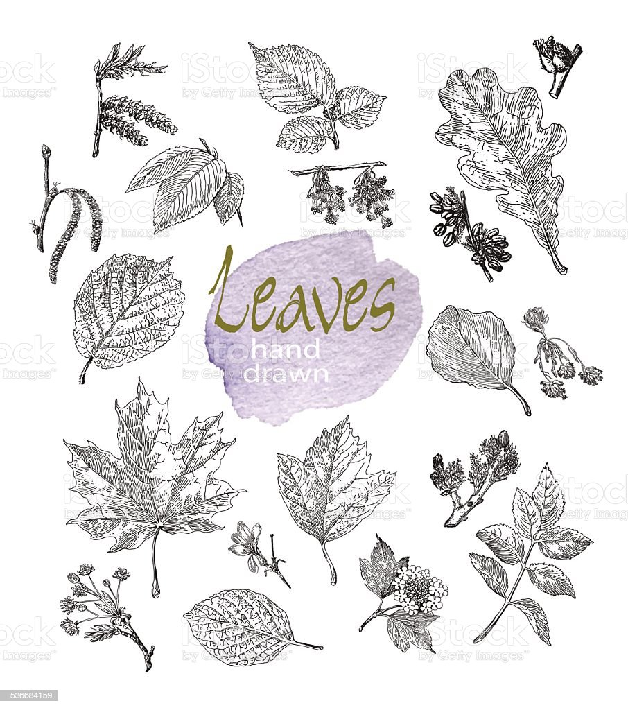 Collection of highly detailed hand drawn leaves and inflorescence  isolated. vector art illustration