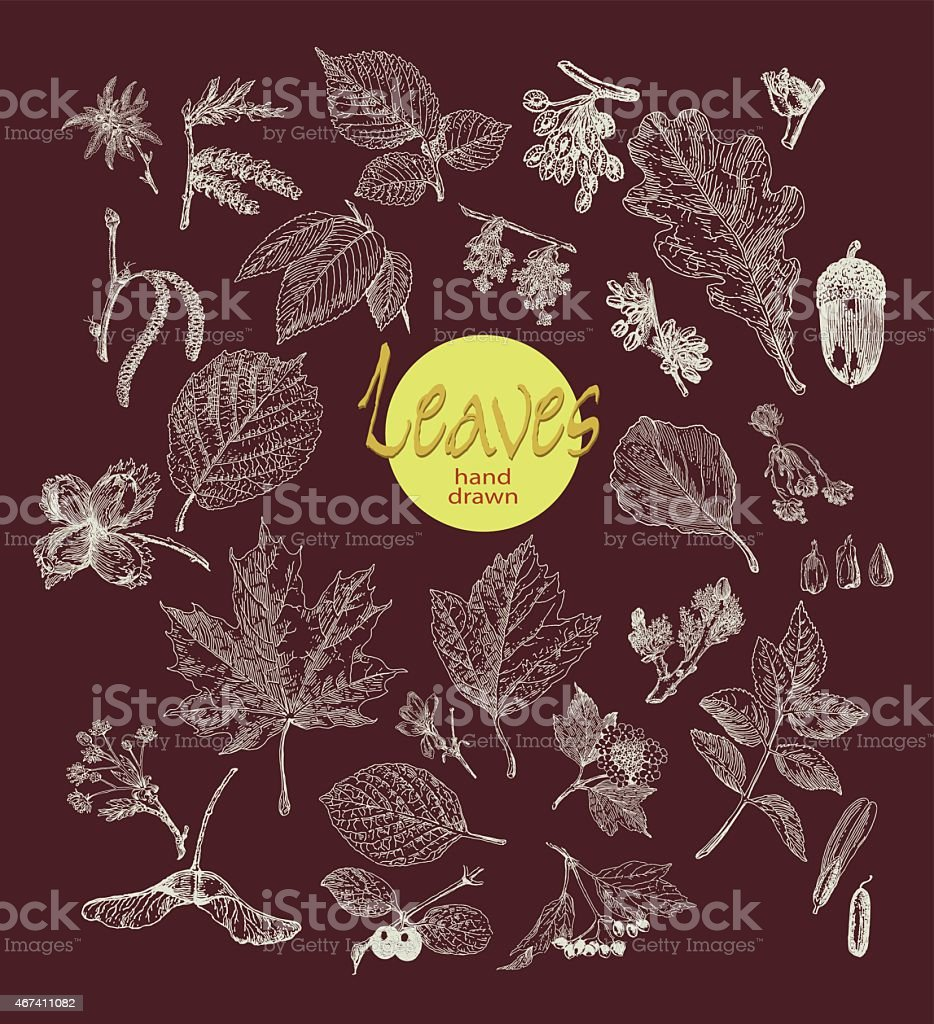 Collection of highly detailed hand drawn leaves  on dark background vector art illustration