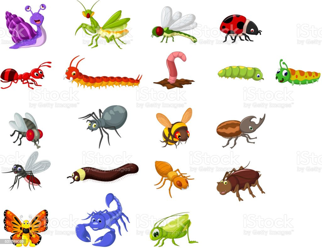 collection of insects cartoon for you design vector art illustration