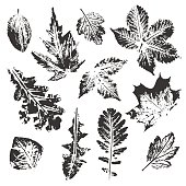 Collection of leaves imprints