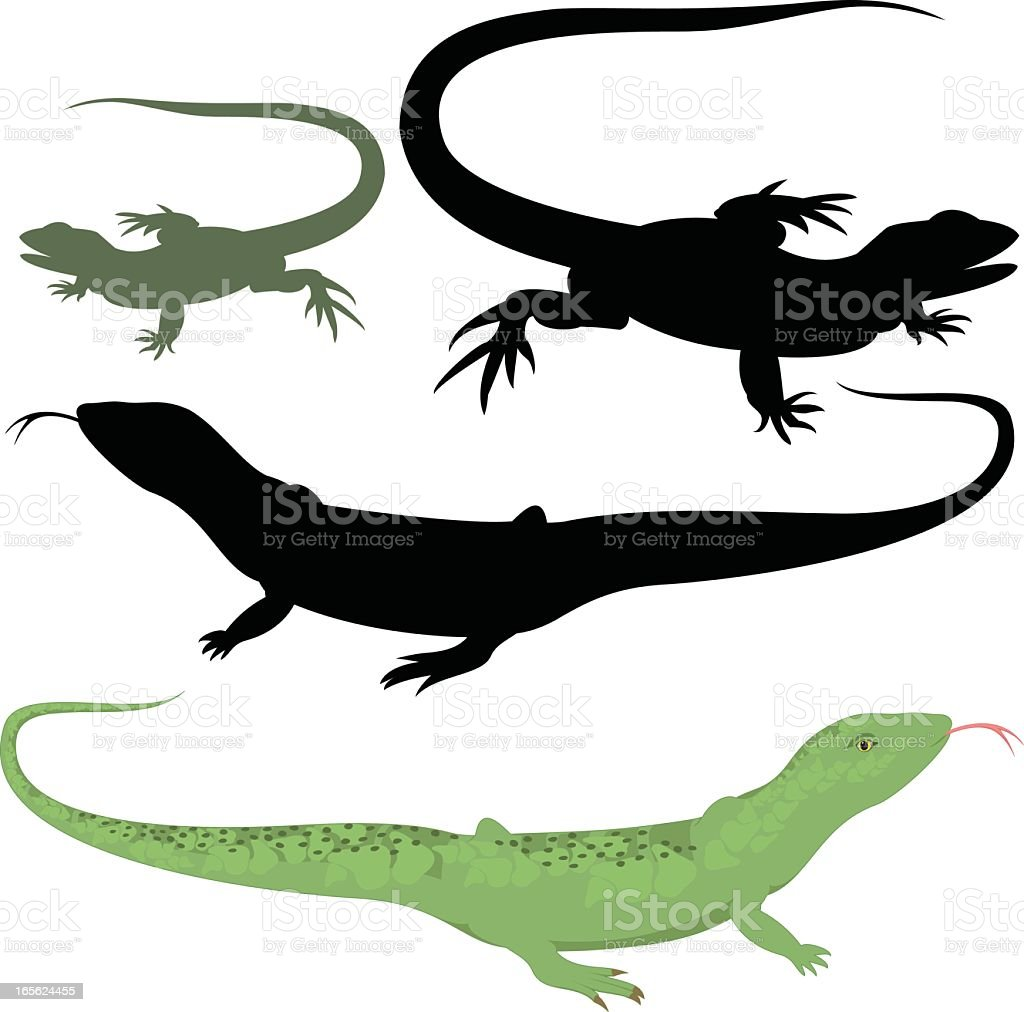 A collection of lizard illustrations vector art illustration