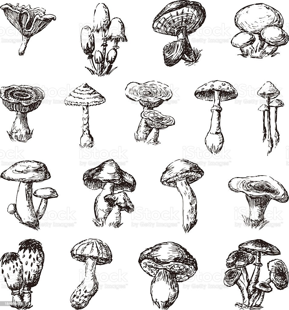 A collection of mushroom illustrations on a white background vector art illustration