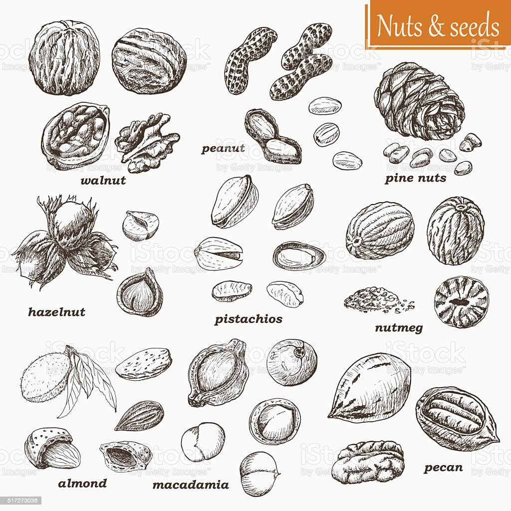 Collection of nuts and seeds vector art illustration