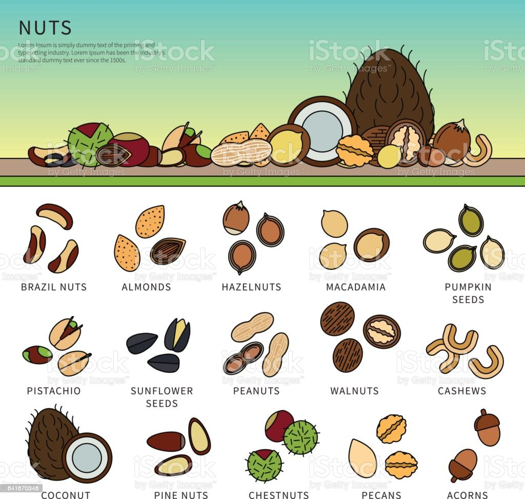 Collection of nuts on the table vector art illustration