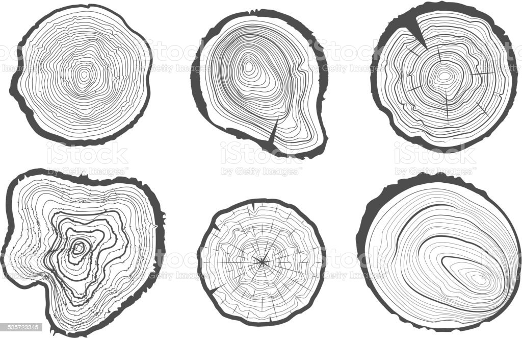 Collection of tree-rings. Vector graphics. vector art illustration