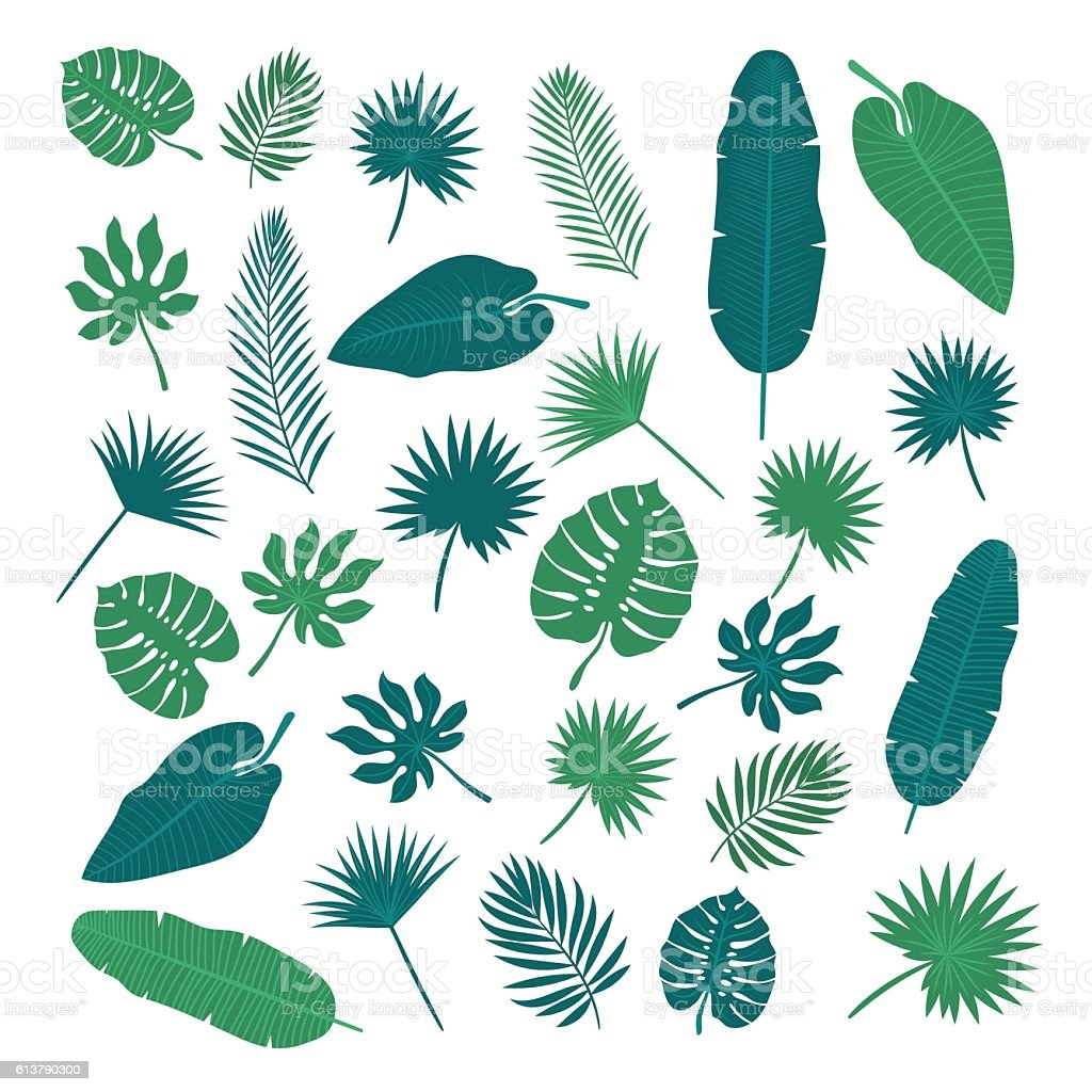 Collection of tropical leaves. Nature elements for your design vector art illustration