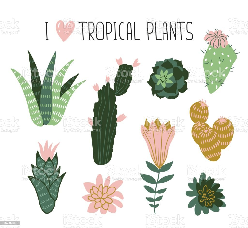 Collection of tropical plants, cactuses, succulents, flowers. Vector elements for stylish design cards, posters, web. vector art illustration