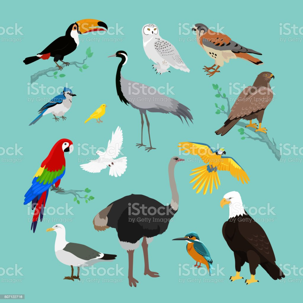 Collection of Various Birds Flat Design vector art illustration