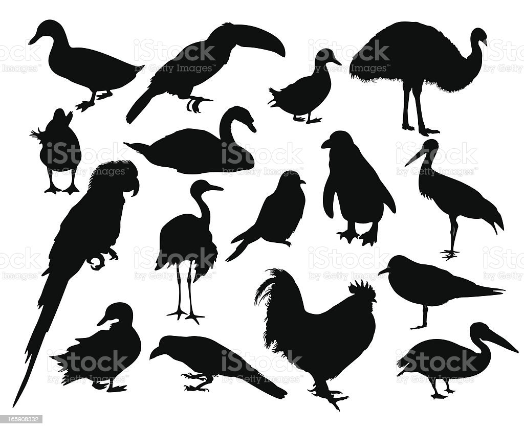 A collection of various birds from around the world vector art illustration