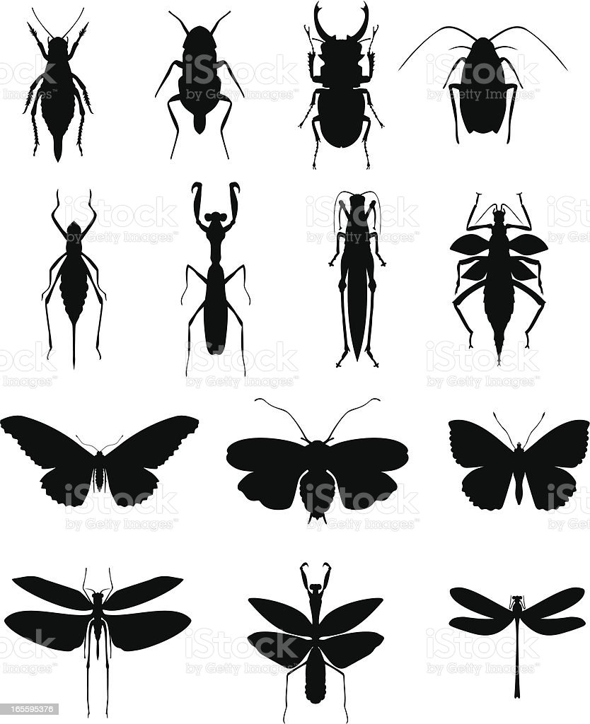 A collection of various insects vector art illustration