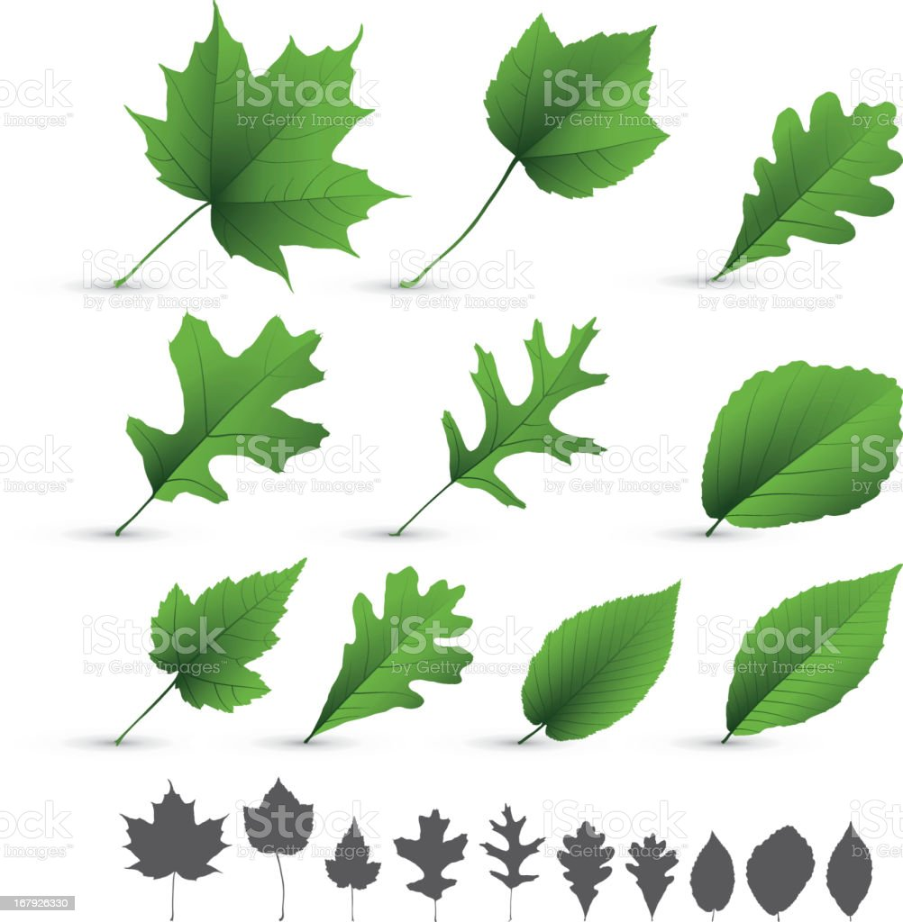 A collection of various types of leaves on white background  royalty-free stock vector art