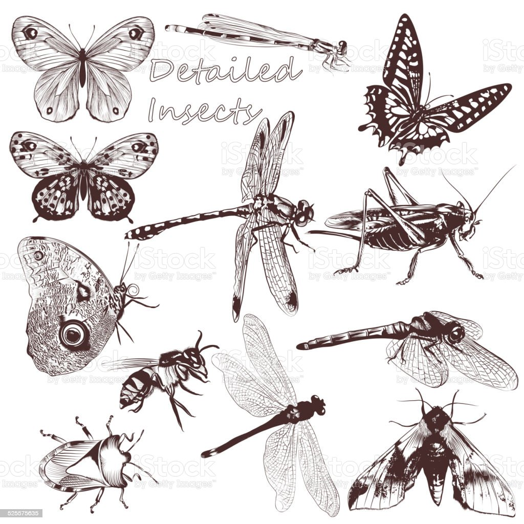 Collection of vector detailed insects for design vector art illustration